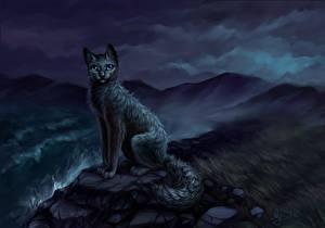 Фотография Кошки Ночь Сидит Животные Фэнтези