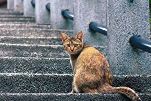 Картинка Кошки Сидит Лестница Животные