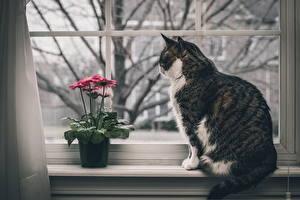 Обои Кошки Окно Животные картинки