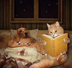 Обои Креатив Кошки Собаки Книга Животные картинки