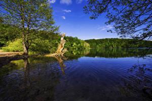 Фото Хорватия Парки Озеро Дерево Пне Plitvice Lakes National Park Природа