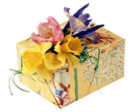 Обои Нарциссы Тюльпаны Белый фон Подарки Цветы фото