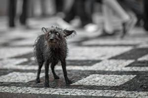 Картинки Собаки Боится Одиночество Грустный Животные