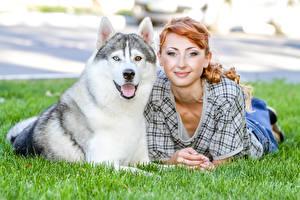 Картинки Собаки Хаски Рыжих Трава Улыбается Взгляд девушка Животные