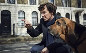 Картинки Собаки Мужчины Камбербэтч Бенедикт Шерлок Холмс season 4 Кино Знаменитости