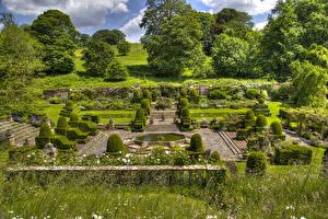 Обои Англия Сады Дизайн Кусты Деревья Mapperton Природа фото