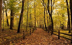 Картинки Леса Осень Листья Забор Деревья Природа