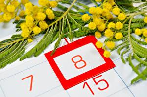 Обои Праздники 8 марта Мимозы Вблизи Цветы