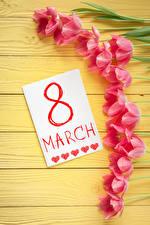 Картинка Праздники Международный женский день Тюльпаны Доски Розовый Английский Цветы