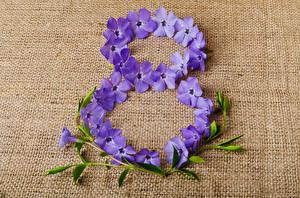 Картинки Праздники 8 марта Vinca Цветы