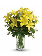 Обои Лилии Белый фон Ваза Желтый Цветы фото
