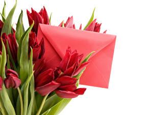 Картинка 8 марта Тюльпан Письма Белым фоном Цветок Цветы