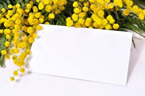 Обои Мимозы Праздники Шаблон поздравительной открытки Цветы