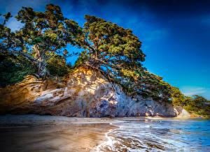 Фотографии Новая Зеландия Побережье Скала Деревья Tasman Природа