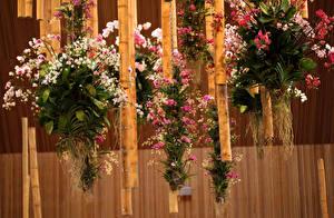 Картинки Орхидеи Бамбук Дизайн