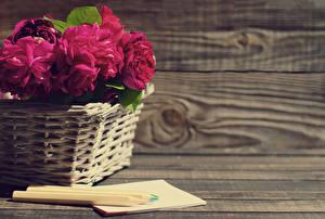 Обои Пионы Корзинка Бордовый Карандаши Цветы картинки