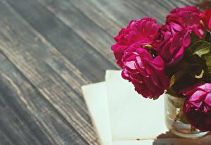 Фотография Пионы Доски Бордовый Цветы