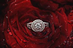 Фотографии Розы Крупным планом Бриллиант Кольца Лепестки Цветы