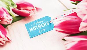 Фотографии Розы Праздники Тюльпаны День матери Цветок Цветы