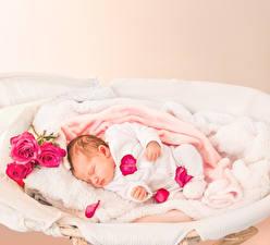 Картинки Розы Грудной ребёнок Спят Лепестки Дети