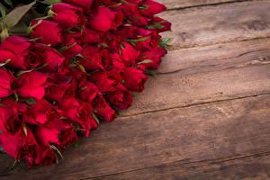 Обои Розы Много Доски Красный Цветы картинки