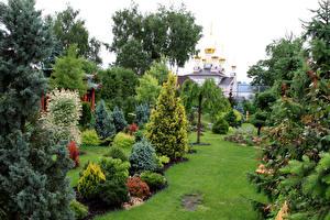 Обои Россия Москва Сады Кусты Трава Botanical garden in new Moscow Природа