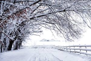 Обои Снег Ветки Деревья Забор Природа фото
