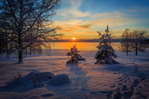 Фото Рассветы и закаты Зима Швеция Снег Ель Arvika Природа
