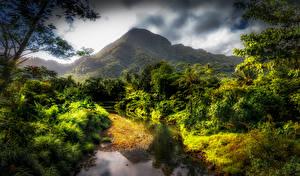 Фотографии Тропики Горы Ручей Кусты HDR Samoa Природа