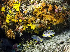 Обои Подводный мир Рыбы Кораллы Животные картинки