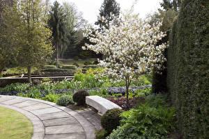 Картинка Великобритания Сады Цветущие деревья Деревья Скамейка York Gate Garden Leeds Природа