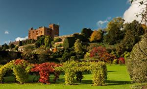 Картинки Великобритания Парк Дизайн Кусты Газоне Дерева Уэльс Powis Castle Garden Природа