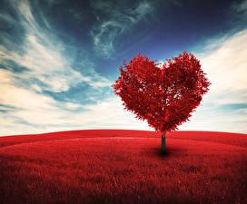 Обои День всех влюблённых Сердце Деревья Природа