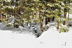 Обои Зима Леса Снег Ель Природа