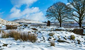 Обои Зима Небо Снег Деревья Природа фото