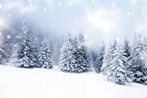 Обои Зима Снег Ель Деревья Природа фото