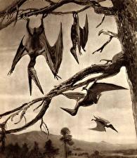 Картинки Древние животные Динозавры Zdenek Burian Черно белое Ветки Pterodactyls Животные