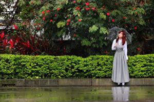 Фотографии Азиаты Зонт Рыжая Девушки