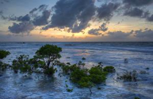 Картинки Австралия Море Небо Вечер Кусты Облака Darwin Northern Territory Природа