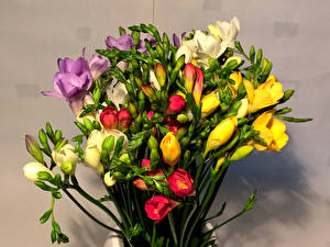 Фотография Букеты Фрезия Цветы