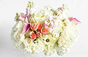 Обои Букеты Розы Каллы Маттиола Цветы