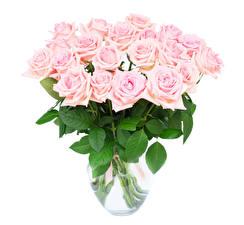 Картинка Букеты Розы Белый фон Розовый Ваза Цветы