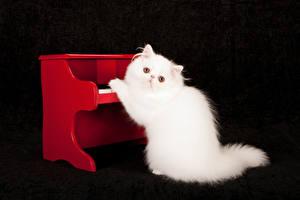 Фотографии Кошки Черный фон Белый Пианино Животные