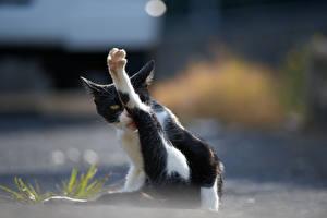 Картинки Кошки Лапы Животные