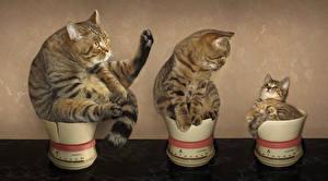Обои Оригинальные Кошки Котенок Втроем Животные