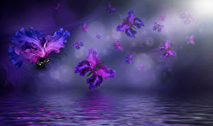 Картинка Креатив Ирисы Бабочки Вода Цветы
