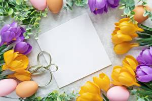 Фотография Крокусы Пасха Шаблон поздравительной открытки Яйца Цветы