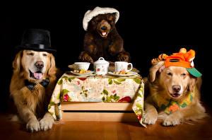 Фотография Собаки Плюшевый мишка Напиток На черном фоне Ретривер Две Шляпе Чашке животное