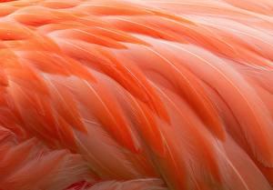 Фотографии Перья Фламинго Макро Оранжевый