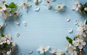 Картинки Цветущие деревья Лепестки Шаблон поздравительной открытки